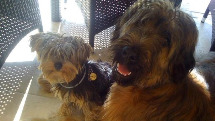 Die Geissens - die Hunde Maddox und Dex Geiss