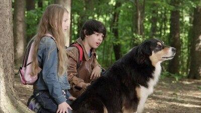 Bark Ranger - Mein Hund, der Held - Spielfilm