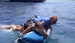 Familie Geiss macht einen Ausflug mit zwei Schlauchbooten. Robert und Davina k&ouml...