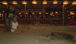 Die Geissens: Schildkröten-Spektakel am Strand